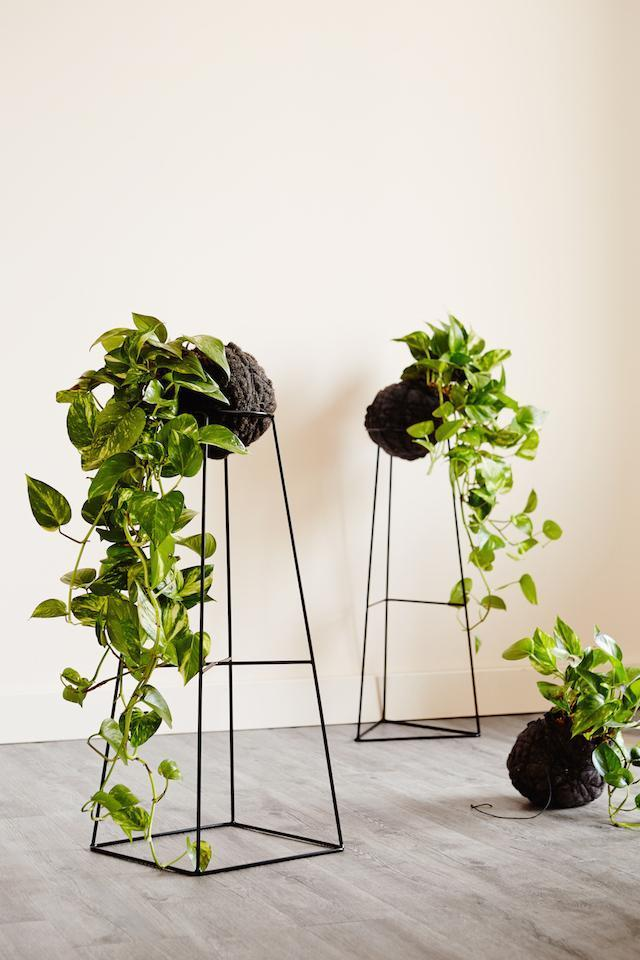 Your Guide To Indoor Plants The Rural Building Co
